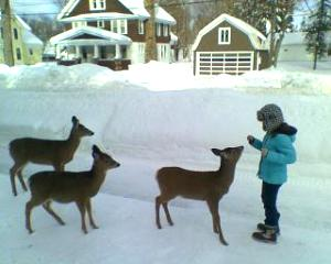 Click image for larger version  Name:deer in the wild LOL.jpg Views:64 Size:16.0 KB ID:240