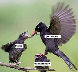 Click image for larger version  Name:MX_Birds.jpg Views:105 Size:41.7 KB ID:2404