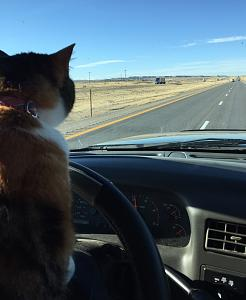 Click image for larger version  Name:Amelia Driving.jpg Views:125 Size:54.6 KB ID:3765