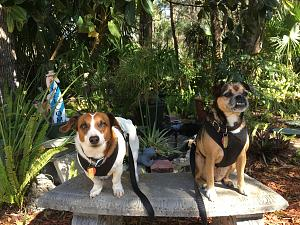 Click image for larger version  Name:Bitth and Mackie in Florida.jpg Views:95 Size:63.1 KB ID:3943