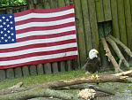 Very American.