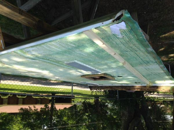 I do not know why this photo came out upside down an attempt to edit the original photo did not work.