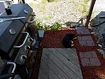 Rusty guarding the grill